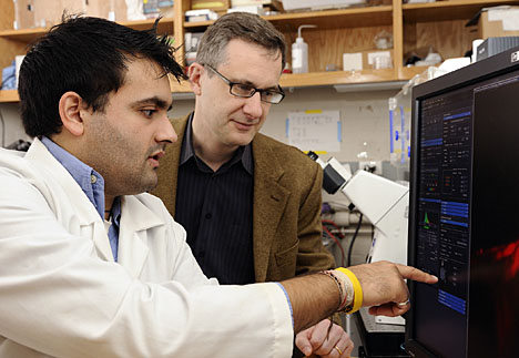 "Doctoral student Shyam Khatau, left, and Denis Wirtz, director of the Johns Hopkins Engineering in Oncology Center, played a key role in finding a bundled ""cap"" of thread-like fibers that holds a cell's nucleus in its proper place. Photo by Will Kirk, Homewoodphoto.jhu.edu."