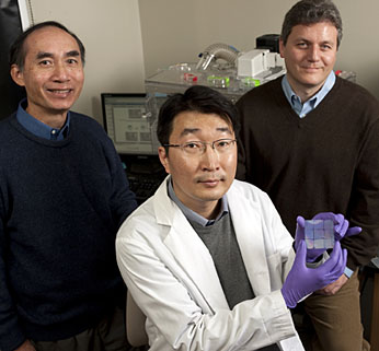Pictured are Leslie Tung, left, and Andre Levchenko, right, both of the Department of Biomedical Engineering, with Deok-Ho Kim, a doctoral student in Levchenko's lab, who holds a nanopatterned chip able to cue heart cells to behave like natural heart tissue. Photo: Will Kirk/homewoodphoto.jhu.edu .