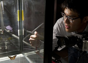 Johns Hopkins undergraduate Tiras Lin used high-speed video cameras to analyze the flight dynamics of painted lady butterflies. Photo by Will Kirk/homewoodphoto.jhu.edu