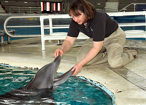Sue Hunter, the National Aquarium's director of animal programs and marine mammals, examines a resident dolphin. Photo by George Graul/National Aquarium